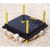 Kücken Wärmaplatte 30x30 cm 22 Watt ohne Temperatur Regler