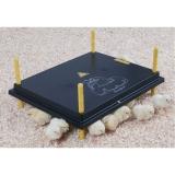 Kücken Wärmeplatte 40x50cm 50 Watt ohne Temperatur Regler